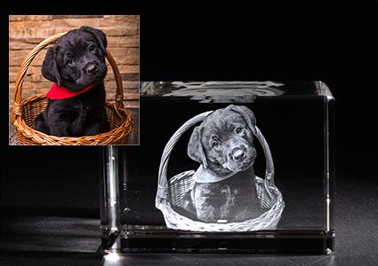 3D Laser Foto mit Hund LOOXIS GmbH